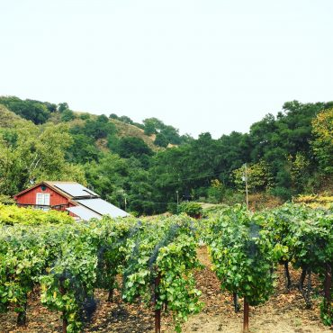 Castro Valley's Hidden Gem: Chouinard Vineyard and Winery